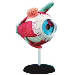 Anatomic Eyeball Puzzle 35 Pieces Anatomy Model 3D Human Eye