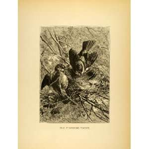 1885 Lithograph Birds Nest Habitat Egg laying Animal