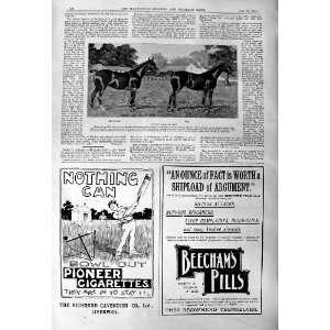 Horses Musk Howard Advertisement Beechams Pills Gold