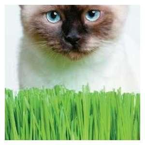 Thompson & Morgan Cat Grass Seeds Patio, Lawn & Garden