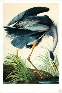 Ltd. Ed. Loates Audubon GREAT BLUE HERON Bird Print