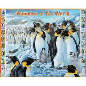 Penguins Of The World Jigsaw Puzzle 1000pc Toys & Games