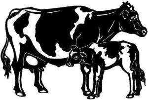 Holstein Cow Vinyl Decal Car Truck Window Sticker