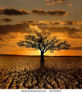 tree dying in a cracked land because of pollution and global warming