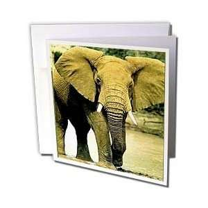 Wild animals   African Elephant   Greeting Cards 12 Greeting Cards